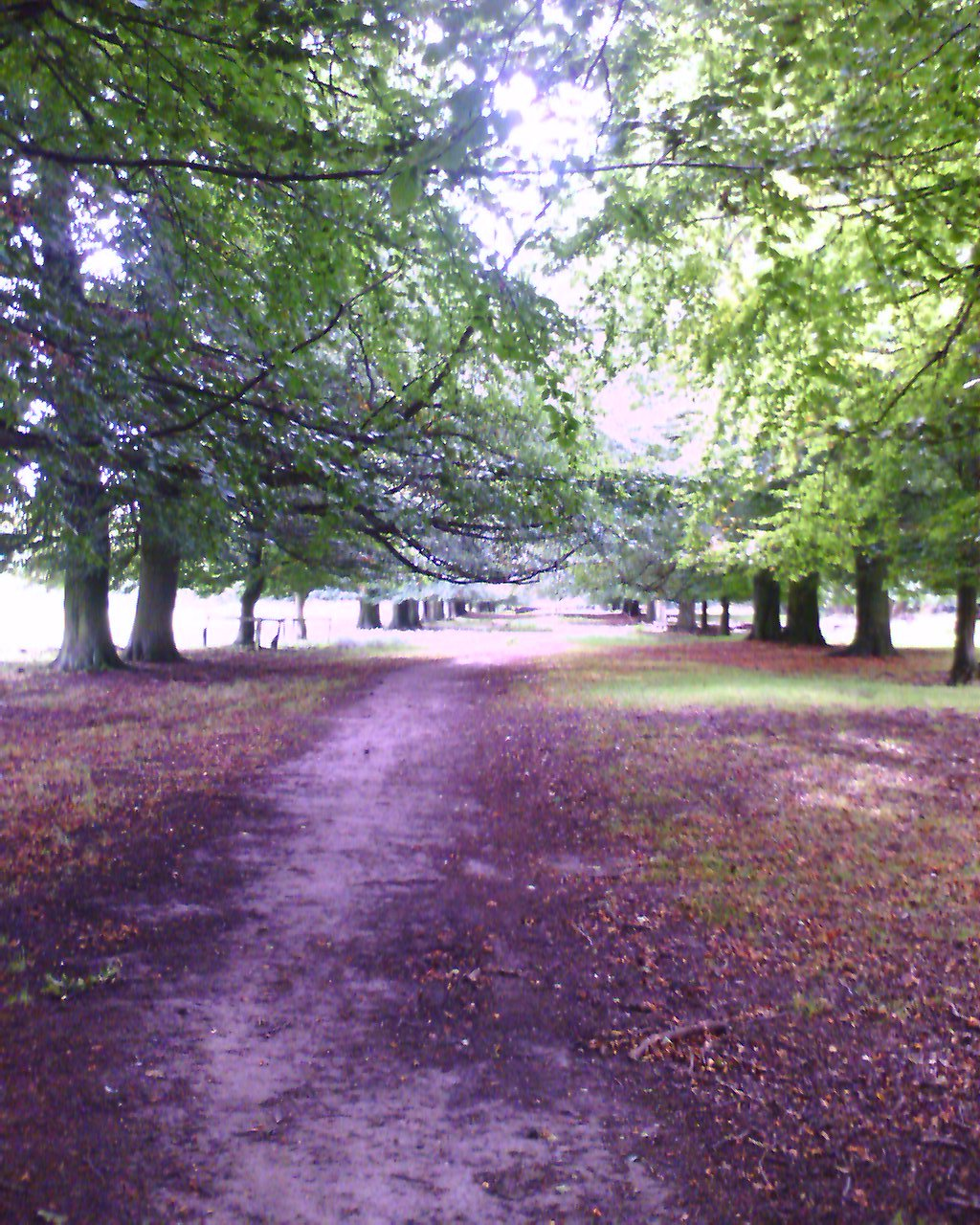 Tatton Park Trees
